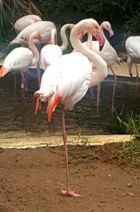 02.flamingok.2