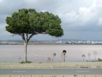 02.flamingok2